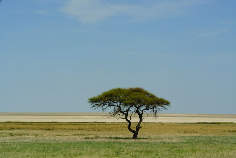 Halali Camp, Etosha National Park | Love Camping
